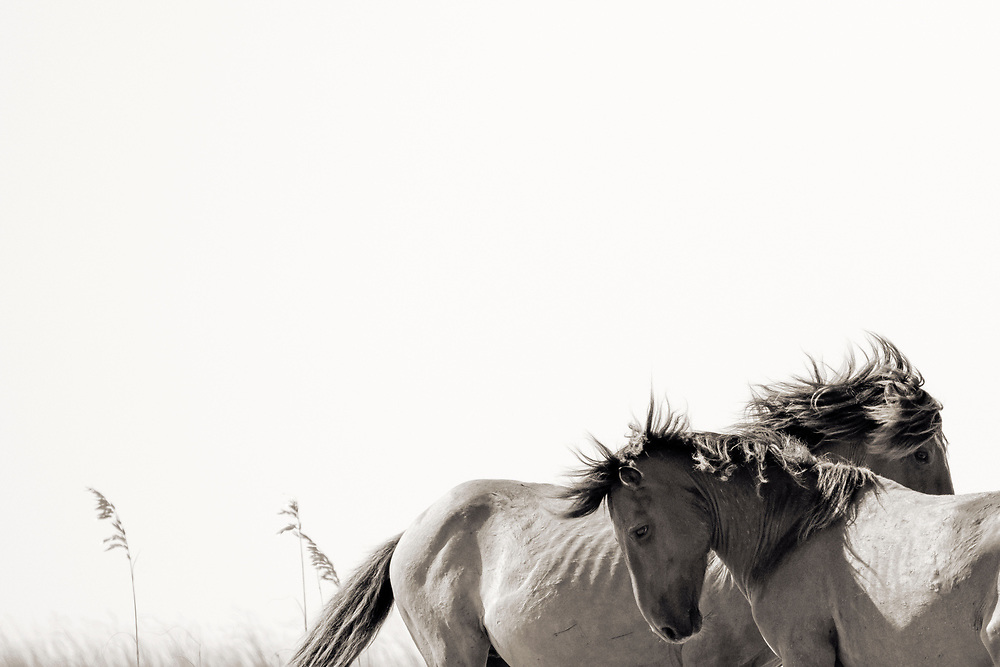 """""""Isn't it funny how day by day nothing changes, but when you look back, everything is different..."""" ~ C.S. Lewis<br /> <br /> Tracie Spence's fine art photography series of The Spanish Wild Mustangs."""