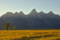 Two trees soak in the last sunlight of the day as the sun sets behind the Grand Tetons. This field is behind the Moulton Homestead.