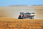 Transporting lentils in grain cart<br /> near Abermathy<br /> Saskatchewan<br /> Canada