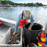 Typical day in the life of a Maine commercial lobster fisherman, counts his day harvest dockside