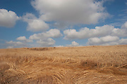 Blue sky and clouds over ancient open prairie near Minot, North Dakota, United States. Reed beds and grasses cover much of the area. This sparse landscape is flat with only slightly elevated areas. Although not dramatic the land is wild and beautiful.