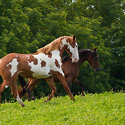 20200902 Kristina Horse