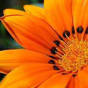 Flower to side, Brisbane, Australia (August 2003)