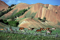 Horses graze below the Red Hills north of Jackson Wyoming. The juxtaposition of the green grass, red hills and blue sky is really striking.