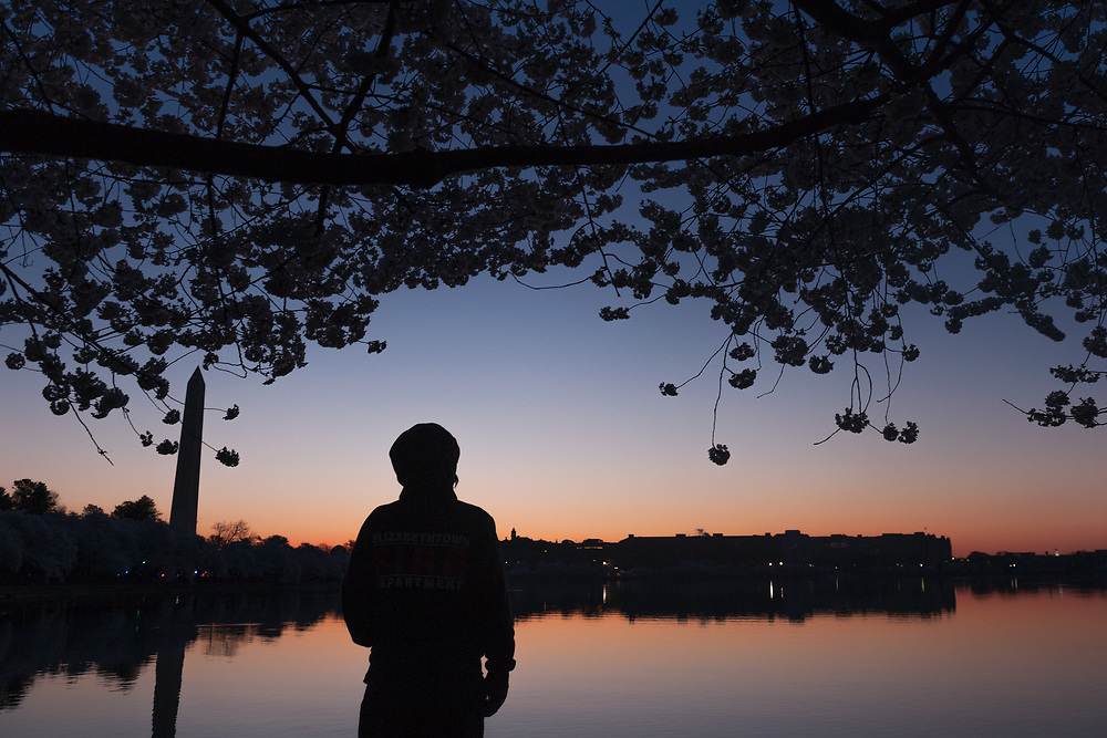 A photographer watches as the sun begins to rise over a cherry blossom filled Tidal Basin in the early morning hours in Washington, D.C.