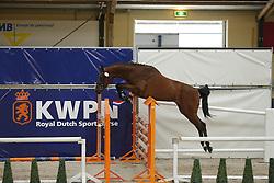 091 - Gracia ES<br /> Vrijspringen 3 jarige Merries<br /> KWPN Paardendagen - Ermelo 2014<br /> © Dirk Caremans