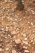 Soil detail. Stony. Sand. Calcareous. Rugiens sector. Pommard, Cote de Beaune, d'Or, Burgundy, France
