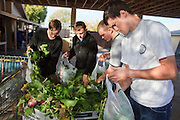 23 DECEMBER 2008 -- CHANDLER, AZ:  LDS Elders Jared Nelson, LEFT, Aaron Woffinden, Ryan Stroh and Adam Cook (ALL CQ) sort and bag donated produce at the Chandler Christian Community Center in Chandler Tuesday.   PHOTO BY JACK KURTZ