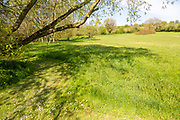 Mown path in grass meadow in large country garden, Cherhill, Wiltshire, England, UK