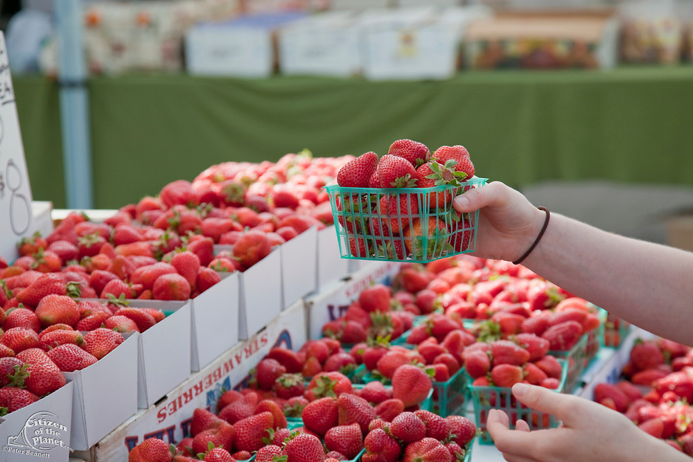 Organic Strawberries for sale at the Culver City Farmer's Market Tuesday afternoons, Culver City, Los Angeles, California, USA