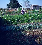 Scarecrow in cottage allotment garden, Marshfield, Wiltshire, England