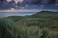 Lodbjerg Dune Plantation - National Park Thy, Denmark