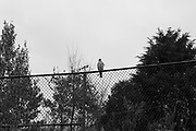 Hawk, Alexandria, VA