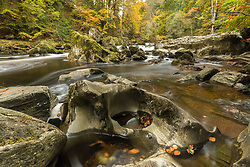 Autumnal colours line the banks of the River Braan in full flow from the Black Linn Falls at The Hermitage in Dunkeld, Perthshire.