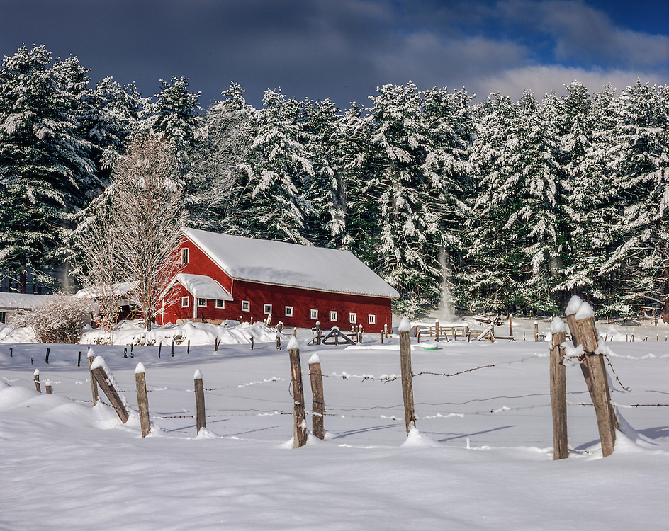 Red barn & fresh snow covers trees & fence, Alexandria, NH