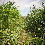 20110718 Root Mass Farm