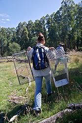 Felicia Pereoglou Carrying Traps Into Field