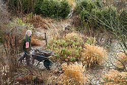 Carol pushing a wheelbarrow at Glebe Cottage in winter