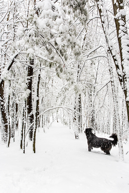 Winter in Hobart, Wisconsin.  Mike Roemer Photo