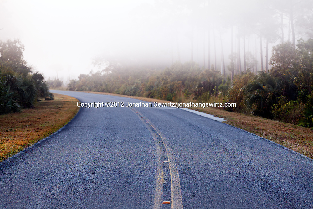A paved road curves into the distance on a foggy morning in Everglades National Park, Florida. WATERMARKS WILL NOT APPEAR ON PRINTS OR LICENSED IMAGES.