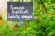 In the court yard a herbal garden with plants typical of the local 'garrigue' bushes. Slate sign with text 'sauge salivat galet rouges', a type of sage Chateau Mourgues du Gres Grès, Costieres de Nimes, Bouches du Rhone, Provence, France, Europe