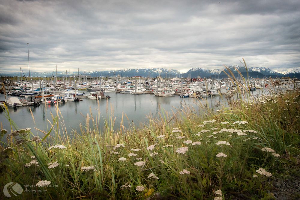 Homer Alaska.  Early morning boatride to the halibut beds