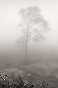 A large tree lost near the top of a mountain in high fog.