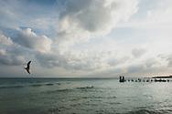 Sea gull in the sky in Playa del Carmen, Mexico