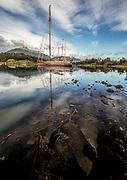 Expedition yacht Pelagic Australis, kelp in Micalvi marina bay, Puerto Williams, Isla Navarino, Tierra del Fuego, Chile