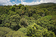 Rainforest seen from Skyrail Cableway, North Queensland, Australia