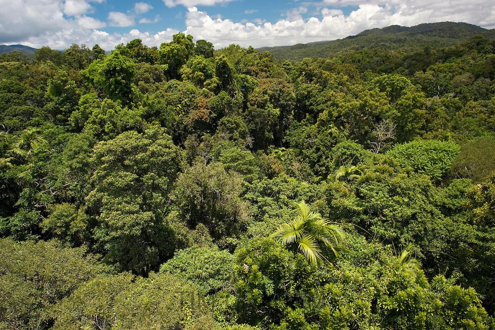 Rainforest seen from Skyrail Cableway, North Queensland, Australia
