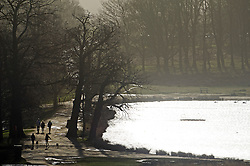 © London News Pictures. 22/02/2014. London, UK.  Dog walkers in Richmond Park in West London at sunrise. The south of England is experiencing warm weather for the time of year and sunshine following weeks of rain and flooding.  Photo credit: Ben Cawthra/LNP