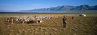 Mongolie, Province de Bayan Ölgii, Vallée de la Khovd Gol, Campement nomade Kazakh // Mongolia, Bayan Olgii province, Kazak yurt camp at Khovd Gol valley, Kazak population.