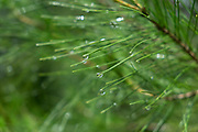 Water droplets on a pine tree near Vathy, Ithaca, Greece. Ithaca, Ithaki or Ithaka is a Greek island located in the Ionian Sea to the west of continental Greece. Ithacas main island has an area of 96 square kilometres. It is the second-smallest of seven main Ionian Islands.