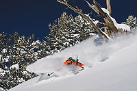 Trees and skis. Pip Hunt surfs the Alta Backcountry, Wasatch Mountains, Utah.
