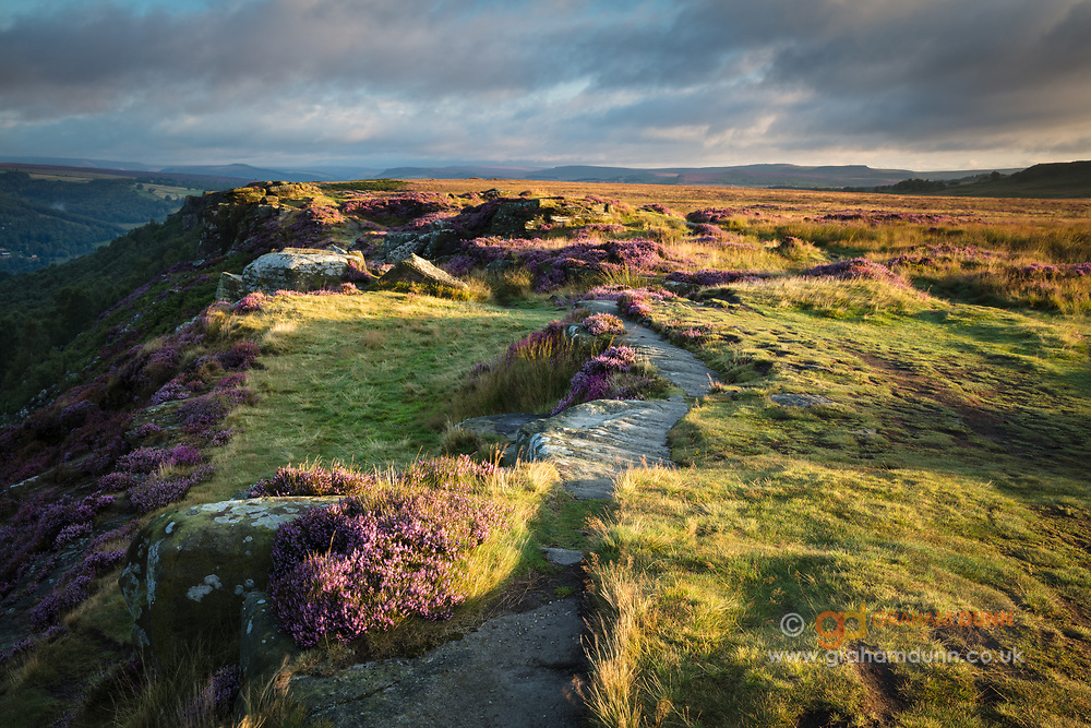 First light illuminates a summer scene atop Curbar Edge in the Peak District. Blossoming pink heather puntuates the green grasses, all contrasting the brooding skies overhead. Classic Derbyshire scenery captured at sunrise in England, UK.