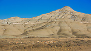 Safety in numbers. A herd of pronghorn antelope work their way across the sage flats.