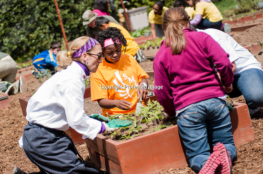 Eliza Croom of Sarah Moore Greene Magnet Technology Academy School, Knox County, TN  plants during an event where she with fellow classmates and First Lady Michelle Obama planted the White House Kitchen Garden for the fifth year in a row at the White House on April 4, 2013 in Washington DC. Photo by Kris Connor