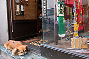 Dog looking after the shop, Rome, Italy.