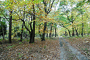 France, Normandy, forest