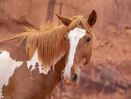Monument Valley, horse, Navajo, Arizona