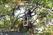 Anti-HS2 tree protectors stand in a cherry picker used by National Eviction Team bailiffs working on behalf of HS2 Ltd to dismantle their tree house at a wildlife protection camp in ancient woodland at Jones' Hill Wood on 1 October 2020 in Aylesbury Vale, United Kingdom. Around 40 environmental activists and local residents, some of whom living in makeshift tree houses 60 feet above the ground, were present during the evictions at Jones' Hill Wood which had served as one of several protest camps set up along the route of the £106bn HS2 high-speed rail link in order to resist the controversial infrastructure project.