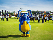 "28 AUGUST 2014 - BANGKOK, THAILAND: A person in an elephant suit leads a ""parade"" during the opening ceremony at the King's Cup Elephant Polo Tournament at VR Sports Club in Samut Prakan on the outskirts of Bangkok, Thailand. The tournament's primary sponsor in Anantara Resorts. This is the 13th year for the King's Cup Elephant Polo Tournament. The sport of elephant polo started in Nepal in 1982. Proceeds from the King's Cup tournament goes to help rehabilitate elephants rescued from abuse. Each team has three players and three elephants. Matches take place on a pitch (field) 80 meters by 48 meters using standard polo balls. The game is divided into two 7 minute ""chukkas"" or halves.      PHOTO BY JACK KURTZ"