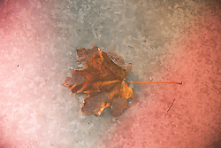 maple leaf on ice at sunset