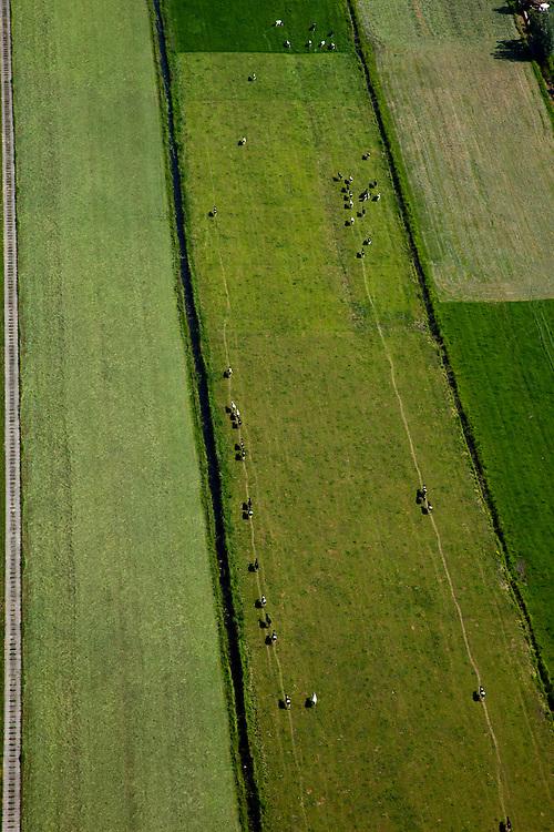 Nederland, Utrecht, Gemeente Maartensdijk, 23-06-2010; Polder Achttienhoven, omgeving Westbroek. Koeien in een lange rij onderweg naar de stal om gemelkt te worden..Cows in a long line on the way to the barn to be milked..luchtfoto (toeslag), aerial photo (additional fee required).foto/photo Siebe Swart