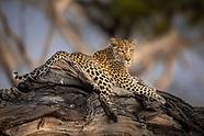 Into The Okavango Delta Gallery