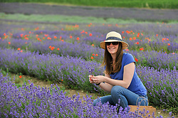 © Licensed to London News Pictures. 09/07/2017. Ickleford, UK. Rachel Walton from St Albans visits Hitchin Lavender farm to view and pick lavender.  Currently in full bloom, the lavender attracts visitors from far and wide to this popular family run farm.  Photo credit : Stephen Chung/LNP