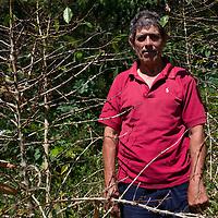 Francisco Hernández, coffee farmer in La Laguna, Santa Barbara, Honduras, stands alongside part of his coffee plantation that has been devastated by leaf rust