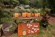 Pineapple fruit stand, Kahekili Highway, Maui, Hawaii
