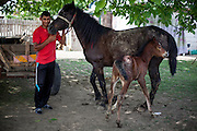 "Young Roma man with his horse named ""Gina"" (as all the other horses) and a new born foal in the Roma area of Frumusani."